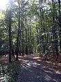 Klanovicky les.jpg
