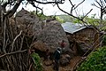Konso village of Mecheke (25) (29077563021).jpg
