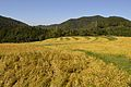 Kyoto Toin Shikimigahara Rice Fields 2013-09A.JPG