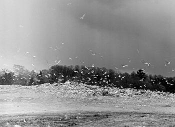 Det sort-hvide billede viser Lövsta losseplads i 1962 fotograferet af Lennart af Petersens.   Farvefotoet til højre er taget på samme sted i august 2010, i baggrunden ses Løvstavigen.