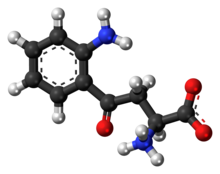 Ball-and-stick model of the L-kynurenine molecule as a zwitterion
