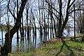 Lac de Bret - panoramio (72).jpg