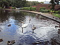Lake, Coronation Park, Ormskirk - DSC09257.JPG
