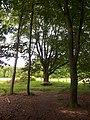 Landschap in Nationaal Park Sallandse Heuvelrug (8).jpg