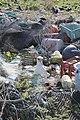 Laysan albatross nesting among marine debris.jpg