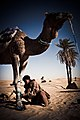 Le petit guide du desert 2.jpg