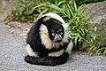 Lemur (27618421818).jpg