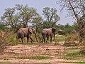 Les éléphants dans la réserve faunique de Kalfou.jpg