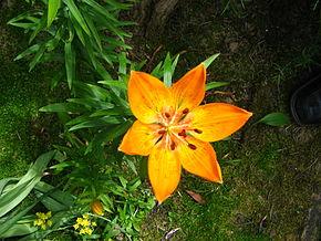 fleurs pour massif