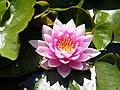 Lillebonne, Seine-Maritime, flore du parc des aulnes.jpg
