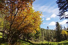 Lincoln National Forest (15397461699).jpg