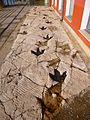 Logroño - Casa de las Ciencias, rastro de terópodo, yacimiento de Los Cayos A, en Cornago, La Rioja.JPG
