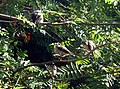 Long Tailed Tits - geograph.org.uk - 228046.jpg