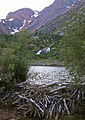 Lundy canyon cliffs falls beaver dam.jpg