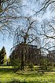 Münster, Park Sentmaring, Naturdenkmal -- 2015 -- 5654.jpg