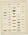 MA I437623 TePapa Plate-XXIV-The-butterflies full.jpg