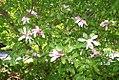 Magnolia x Betty 4zz.jpg