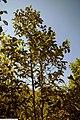 Magnolia x Pink Goblet 5zz.jpg