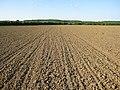 Maize field - geograph.org.uk - 1337803.jpg
