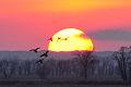 Mallards at sunset Lacreek National Wildlife Refuge (13609099914).jpg