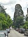 Mammutbaum Nord-Süd-Richtung fotografiert.jpg