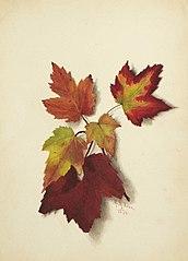 Untitled (Autumn Leaves)