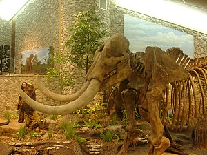 Mastodon State Historic Site - Skeleton museum display