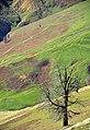 Masuleh - Khalkhal Road - panoramio (1).jpg