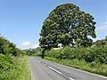 Mature tree by the B4356 near Whitton - geograph.org.uk - 867263.jpg