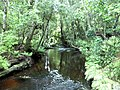 McLean Falls, river before the falls - panoramio.jpg