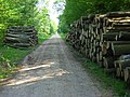 Micheldever Wood - geograph.org.uk - 808459.jpg