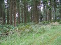 Middle Hills Wood - geograph.org.uk - 948066.jpg
