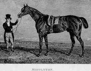 Middleton (horse) - Middleton. A contemporary engraving.