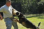 Military Working Dogs DVIDS258008.jpg