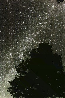 MilkyWay behind Tree 2.jpg