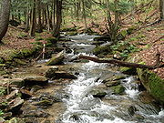 Minister Creek runs 11.8 miles through Allegheny National Forest, and is a very popular hiking trail following the creek