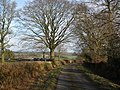 Minor road to Howstead - geograph.org.uk - 1187115.jpg