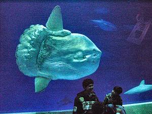 Monterey Bay Aquarium Wikipedia