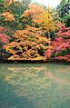Momijidani-autumn.jpg