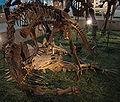 MonolophosaurusJiangiAttackingATuojiangosaurusMultispinus-PaleozoologicalMuseumOfChina-May23-08.jpg