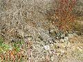 Monroe Furnace ruins.jpg
