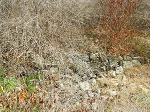 Monroe Furnace - Ruins of the foundations