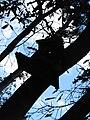 Monumento a la vida silvestre 2014-09-13.JPG