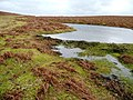 Moorland pool - geograph.org.uk - 693966.jpg