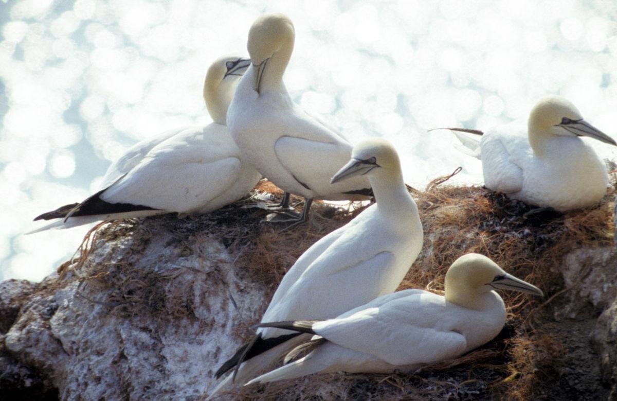 Biele vtáky