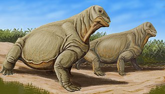 Moschops - An artist's conception of Moschops capensis, based on the reconstruction of a skeleton found in a semi-desert region of South Africa. The skeleton is displayed at the American Museum of Natural History.