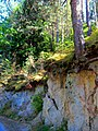 Moss, Pine and Tufa - panoramio.jpg