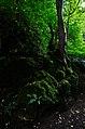 Mossy rocks (15136732896).jpg