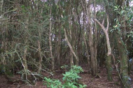 Mount Royal - rainforest summit