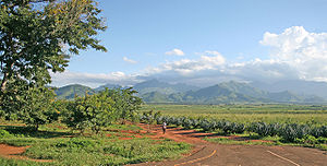 Morogoro - Sisal plantations in the outskirts of Morogoro (Uluguru Mountains in the background
